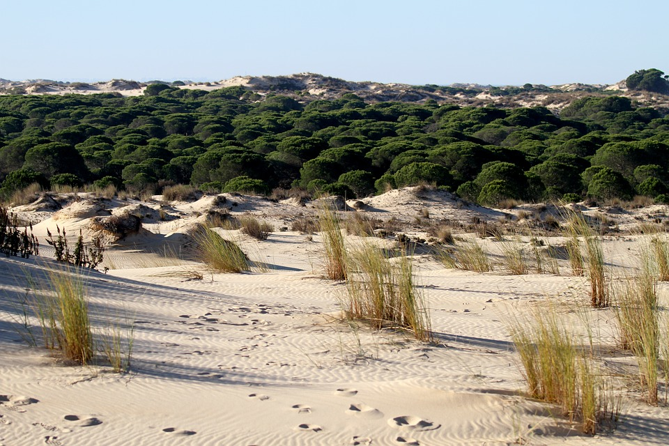 donana-national-park